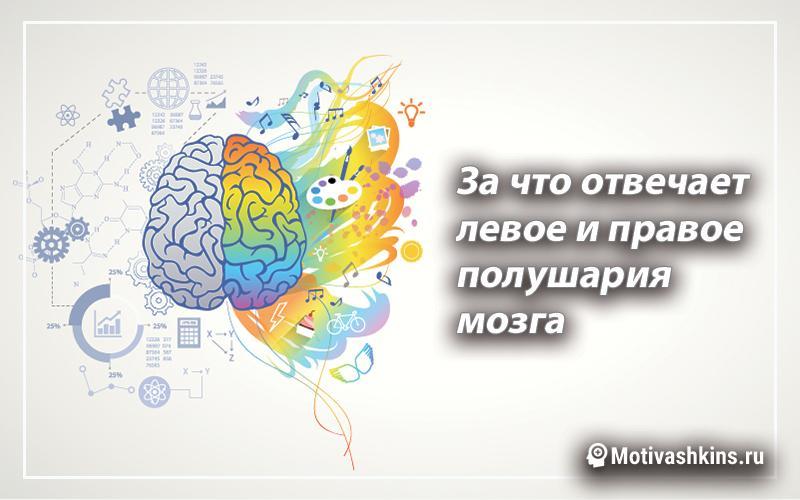 Как развивать свой мозг - левое и правое полушария