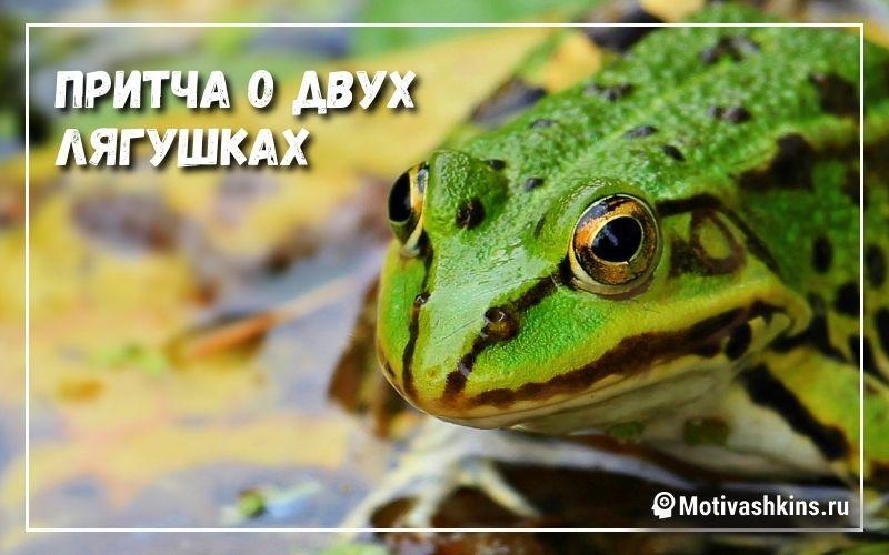Притча о двух лягушках - короткая притча
